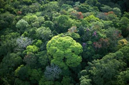 registered sustainable yield forest project