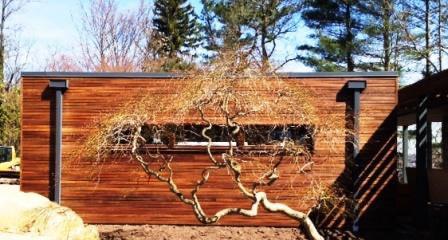 Edited_ipe_house_with_tree.jpg