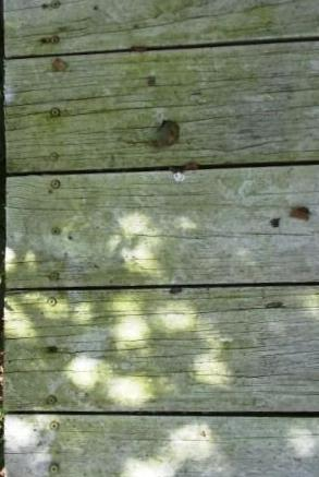 mouldy pine decking boards