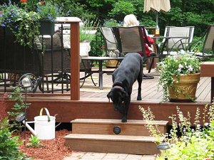 Ipe decking is pet friendly
