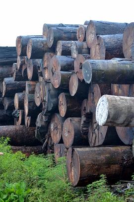 brazilian hardwood lumber