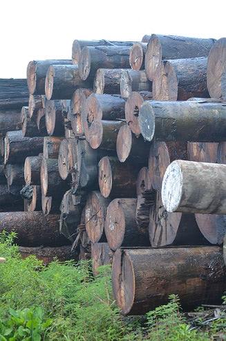 ipe wood after harvest in brazil