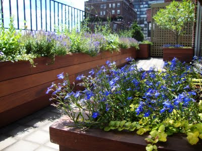 Ipe hardwood raised planter beds on a BNYC rooftop deck and garden, purple and green flowers with a city skyline behind it
