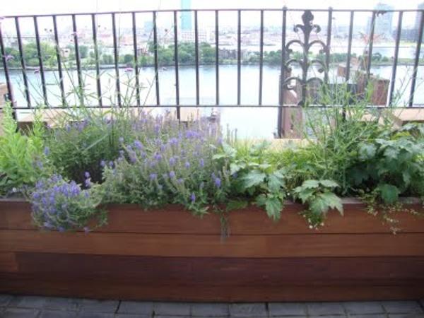 Beautiful Ipe Planter on Rooftop Deck