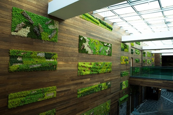 thermally modified ash cladding in living wall green design